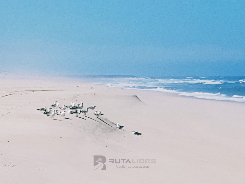 Playas de Meira con gaviotas